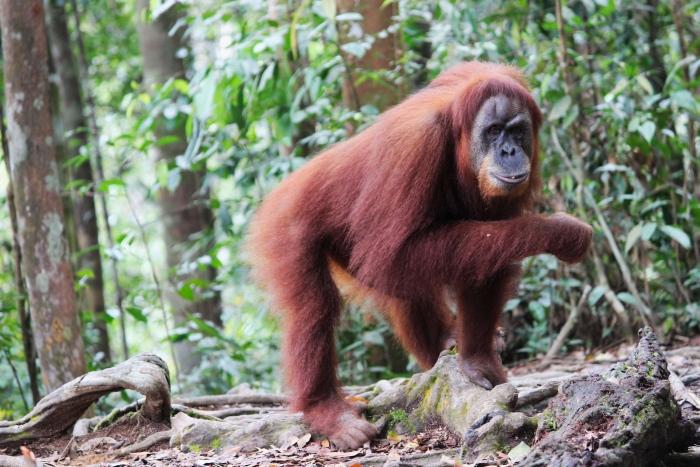 Sumatra Abenteuer vanlife