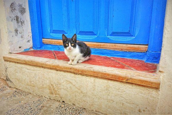 Katze-in-Asilah