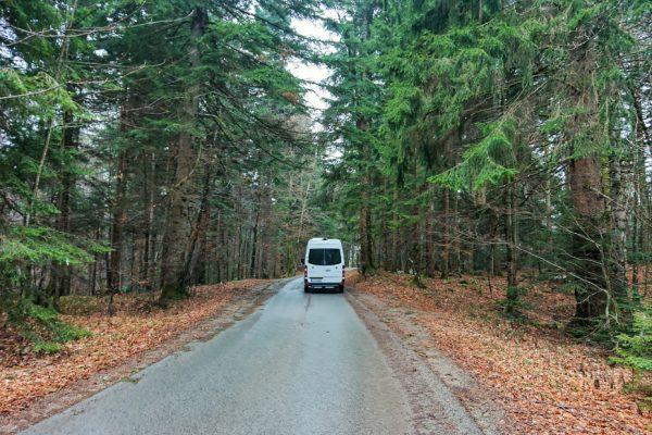 in kroatischen Wäldern...